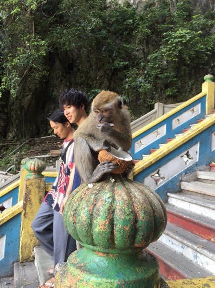 monos templo cuevas de batu