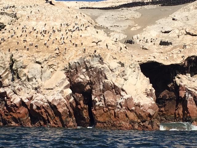 aves guaneras islas ballestas