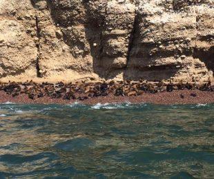 islas balletas en paracas
