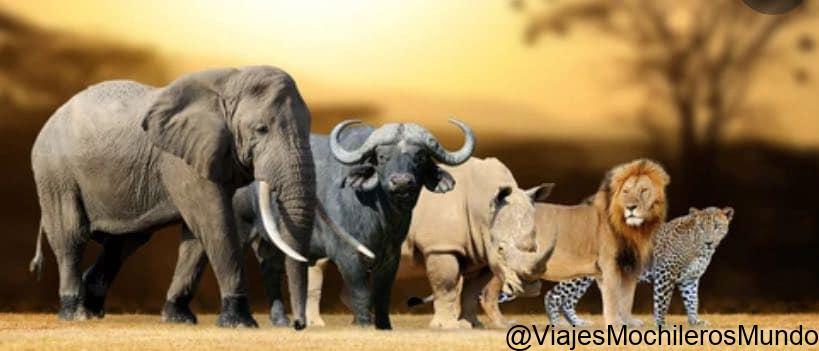 big five animales en kenia