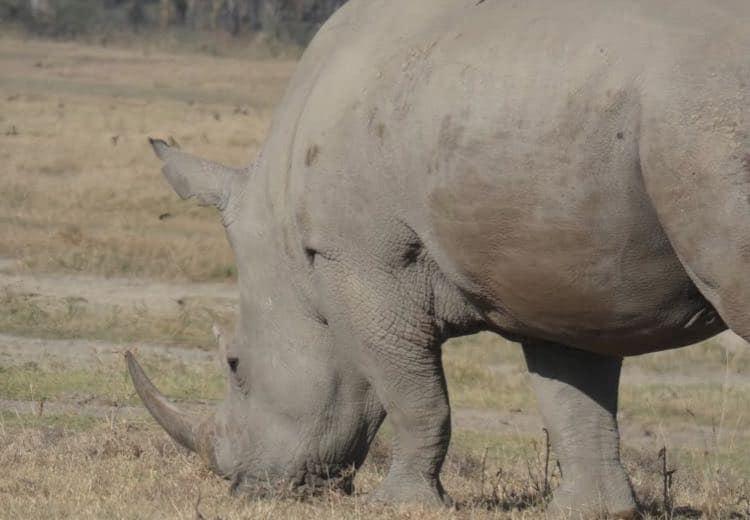 fauna y flora safari kenia