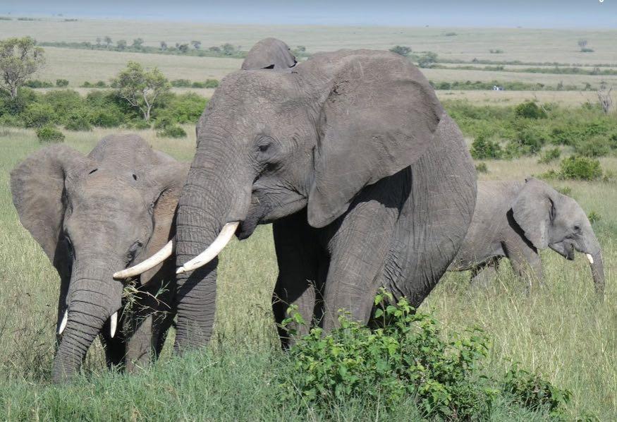 hacer un safari en kenia