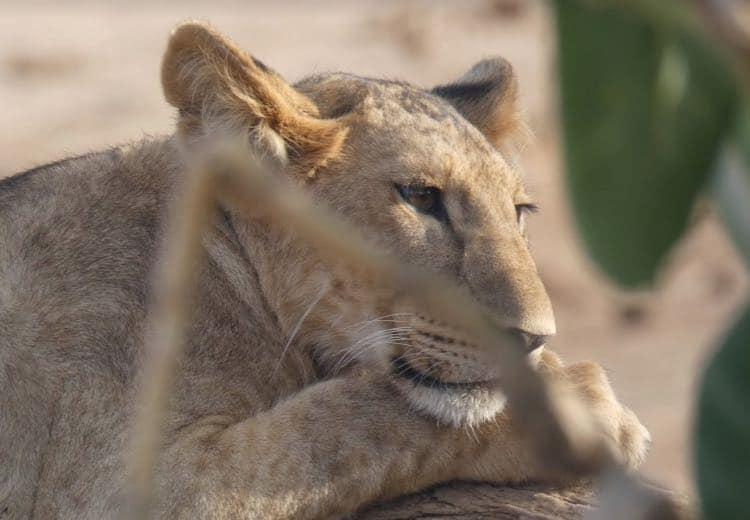 organiza tu safari