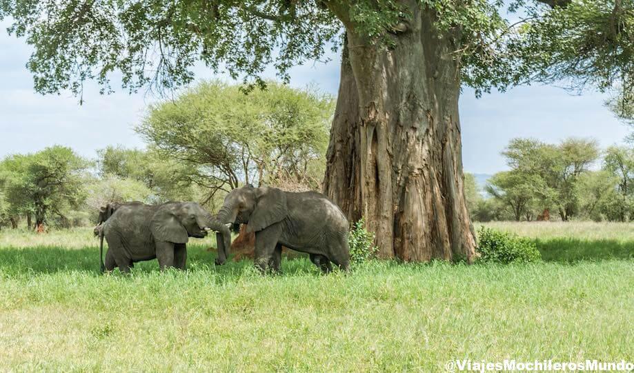 parque nacional tarangire norte tanzania
