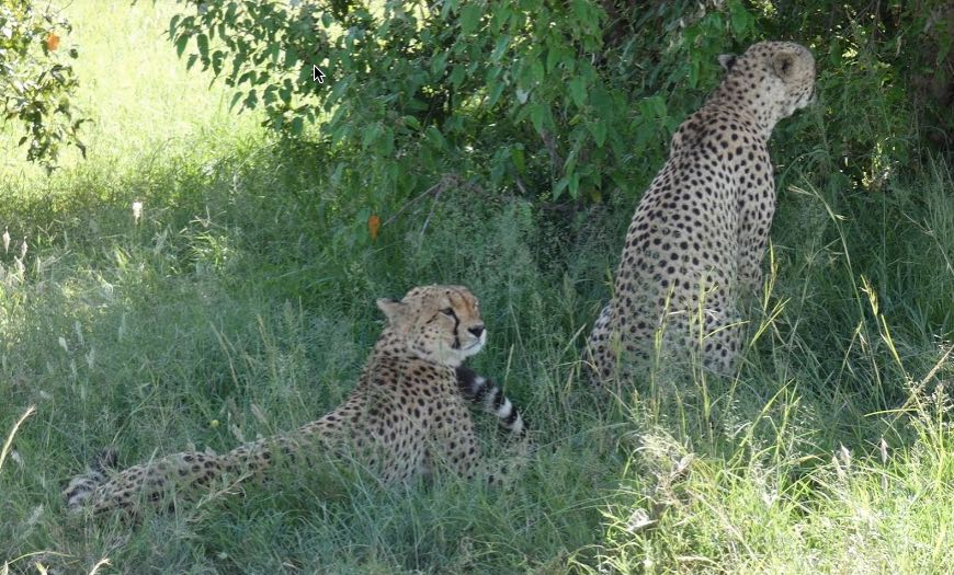 parques nacionales safari en kenia