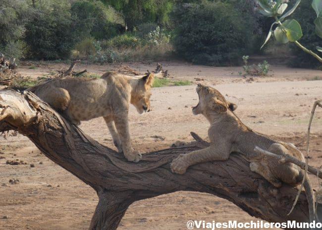 ruta de safari en africa