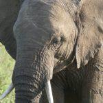 ruta de viaje kenia tanzania safaris
