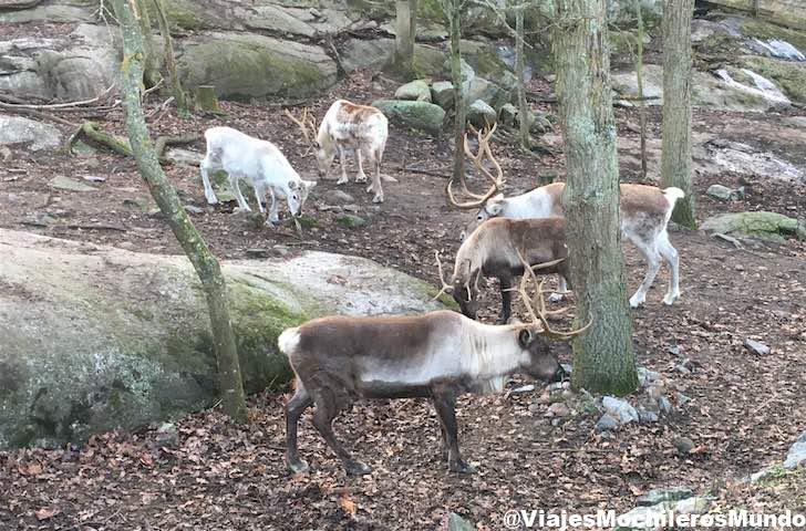 skansen museo y zoo a aire libre estocolmo
