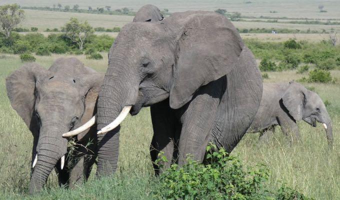 viajar a kenia por libre