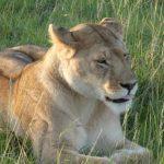 viaje a kenia y tanzania africa